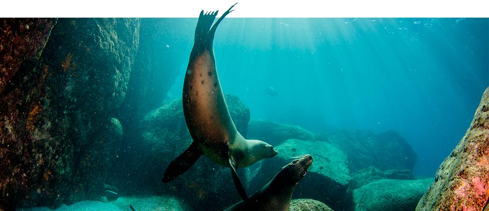 In search of the treasure, sea Lions Show