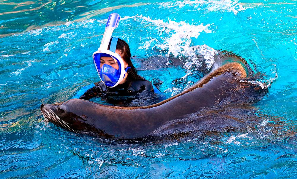 Nadar con leones marinos