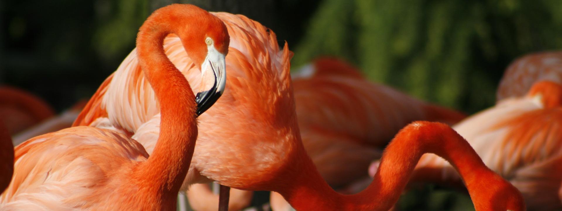 10 curiosidades sobre los flamencos
