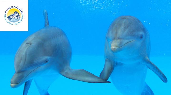 Escuela de delfinoterapia
