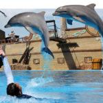 Emotions, show<br /> de delfines