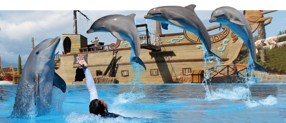 Emotions, spectacle de dauphins