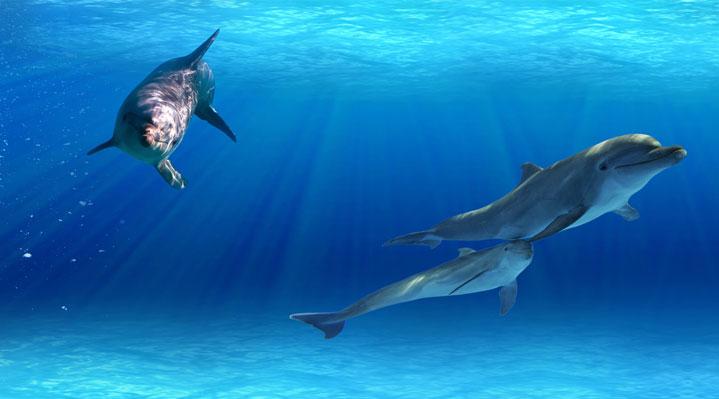¿Los delfines tienen la mejor memoria del mundo animal?