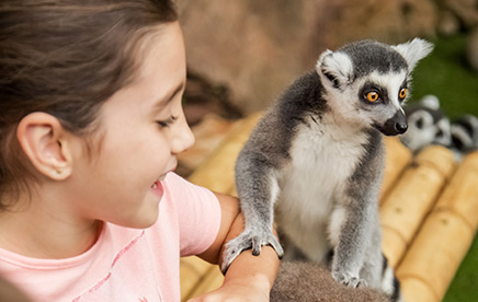 A Photo<br /> with the Ring Tailed-Lemur