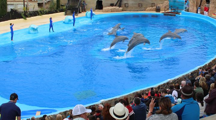 Mundomar show delfines 2016