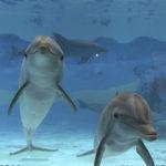 Durmiendo con<br /> delfines