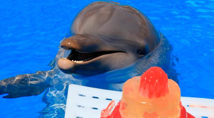 Mundomar celebra el cumpleaños de un león marino y un delfin