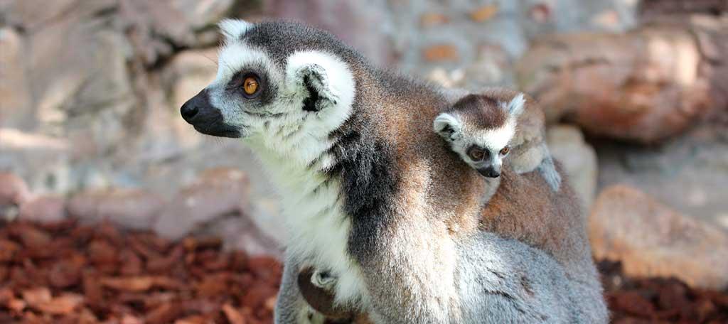 Nacen en Mundomar Benidorm nuevas crías de especies en peligro de extinción