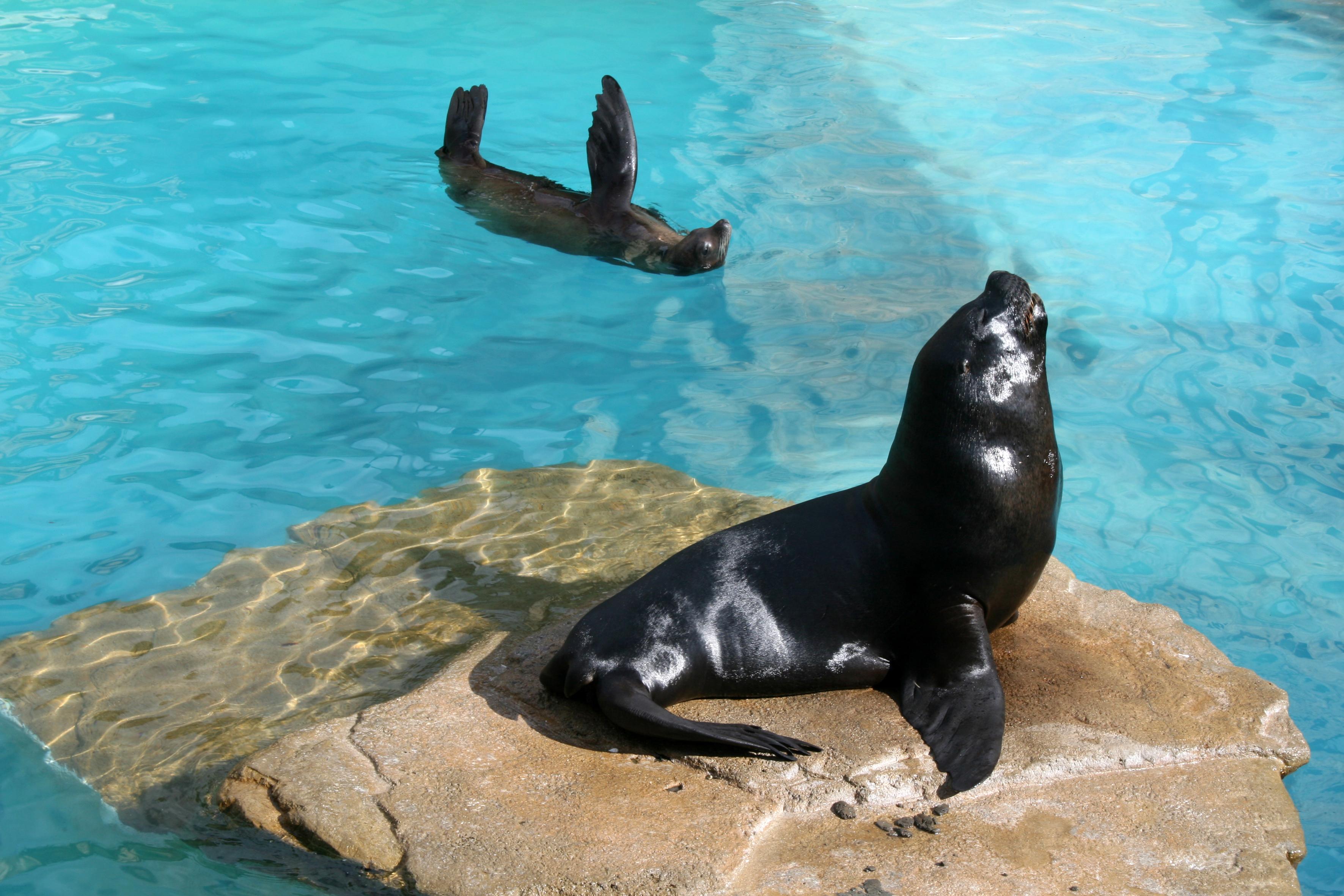 ¿Cuáles son las diferencias entre las focas y los leones marinos?