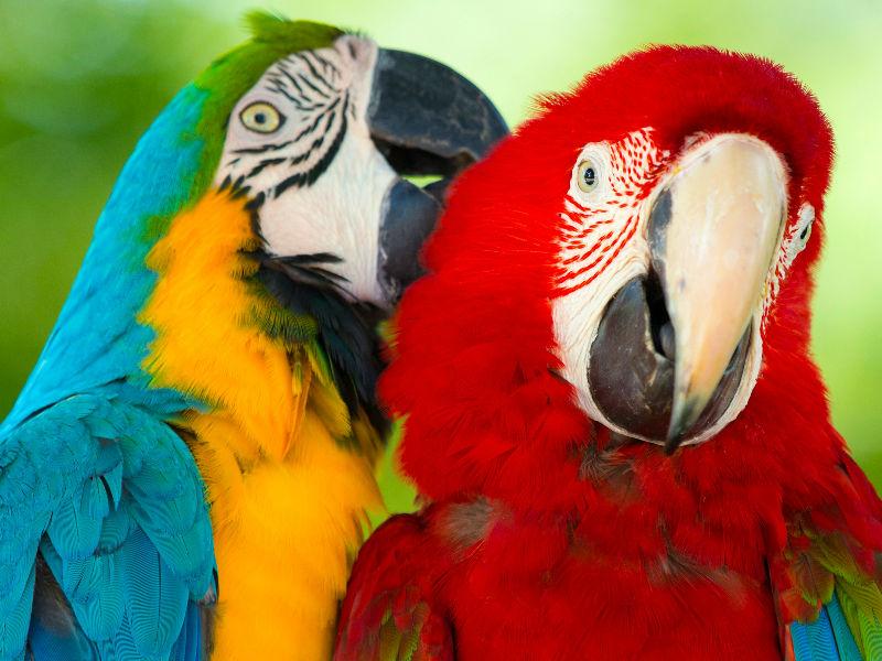 5 cosas que los amantes de los papagayos deberían saber