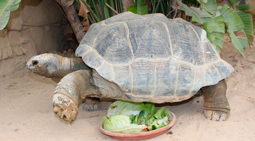Descubriendo a las Tortugas gigantes de Aldabra
