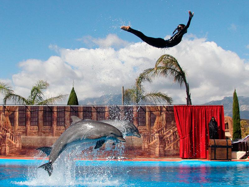 Mundomar comienza halloween con nuevo show de delfines for Lo ultimo en chismes del espectaculo