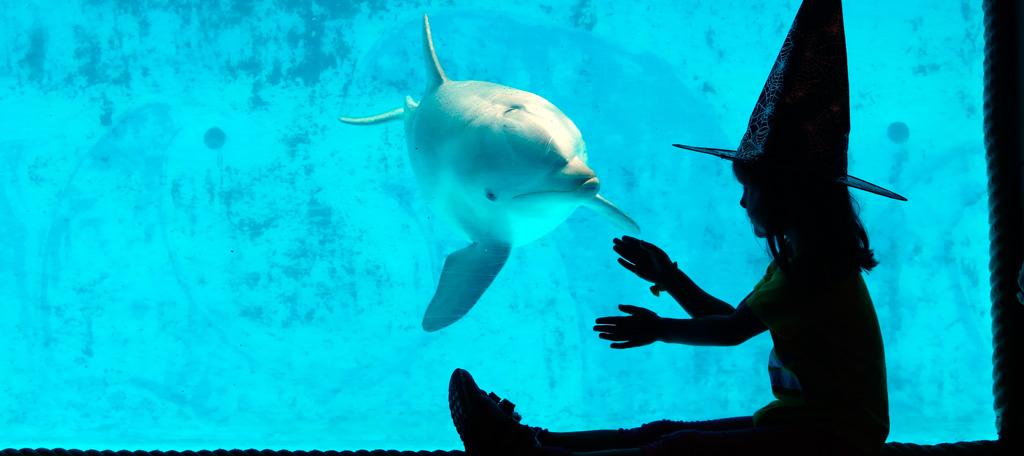 Mundomar comienza Halloween con nuevo espectáculo de delfines