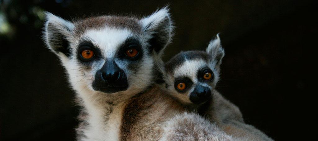 Mundomar participa en dos proyectos de conservación