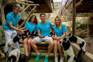 un grupo dándo de comer a los lemures
