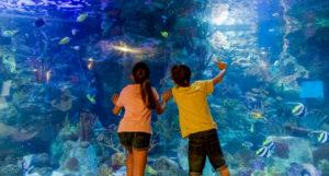 niños con un acuario de fondo