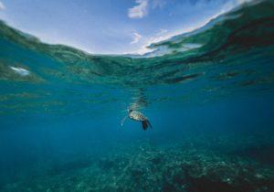 tortuga en el mar