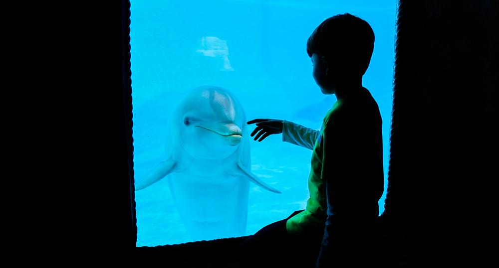 Niño contemplando de cerca a un delfín