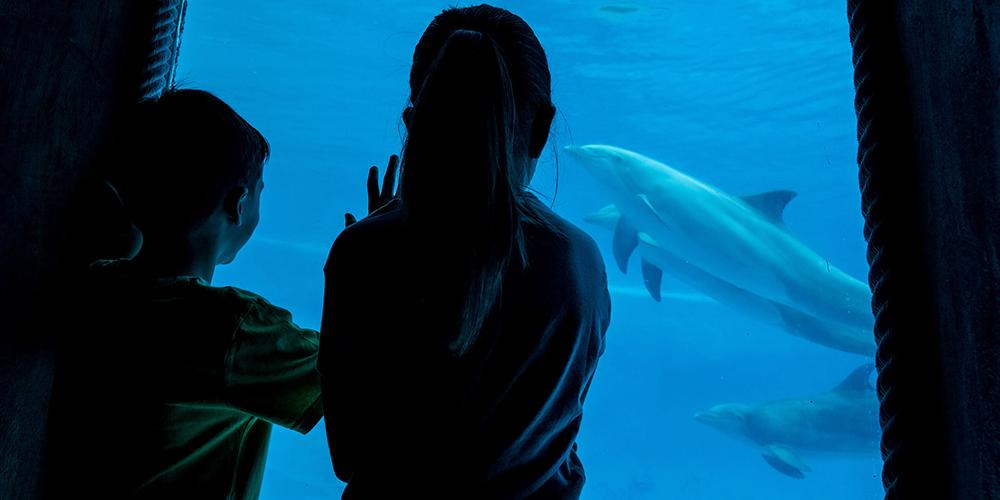 Niños mirando delfines en Mundomar