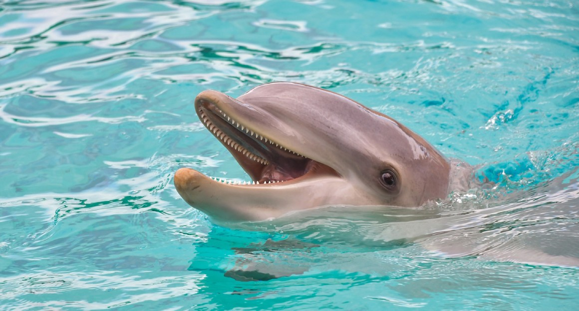 Dolphing swimming