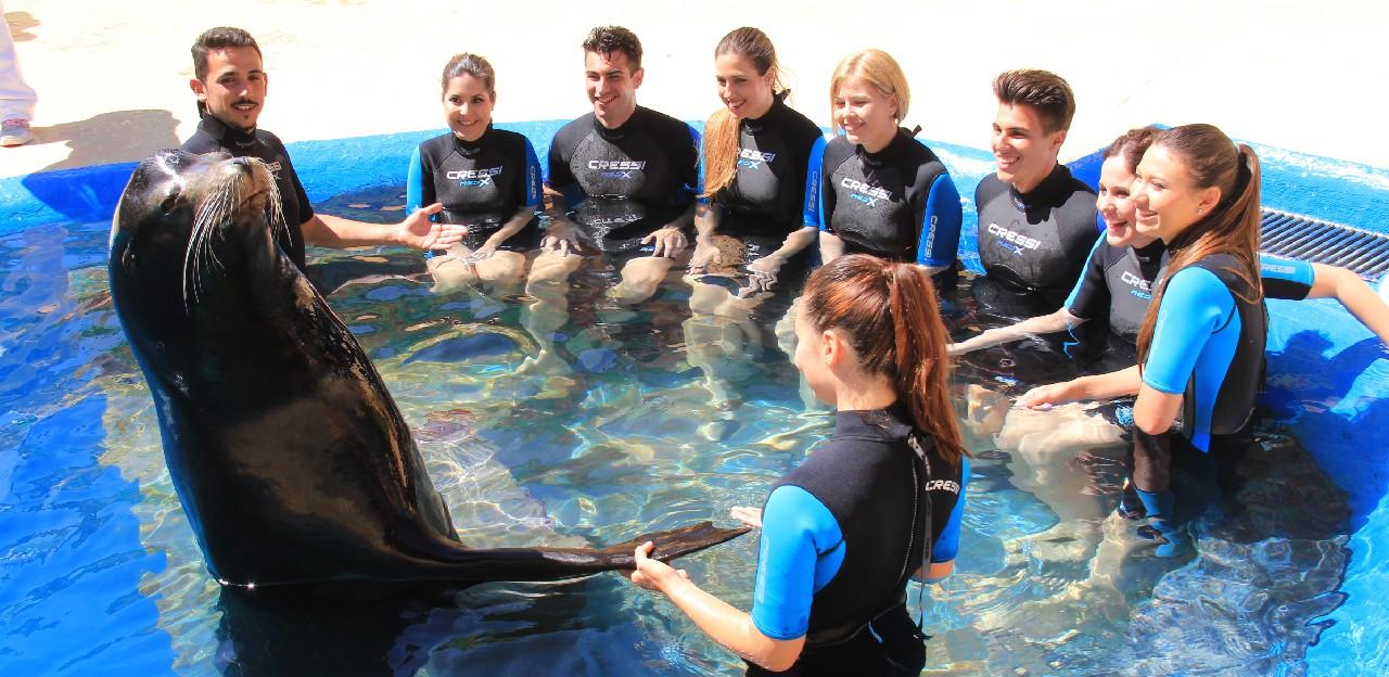 Participantes en la experiencia aprendiendo sobre leones marinos